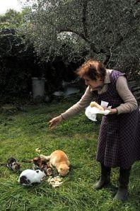 Vittoria and the gatti