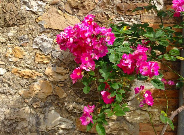 roses stone