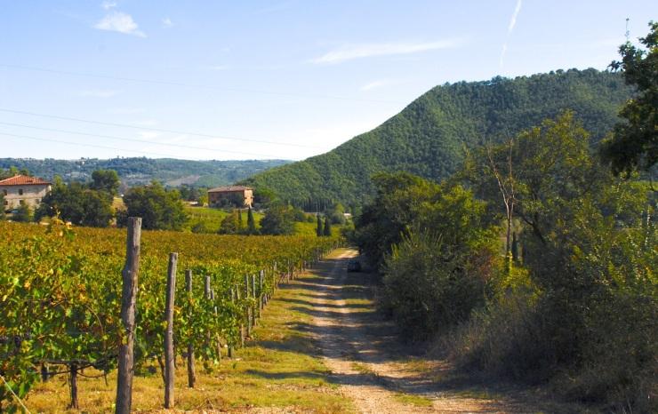 vineyard strada