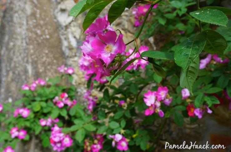 roses.012